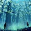 Forêt aux Lucioles
