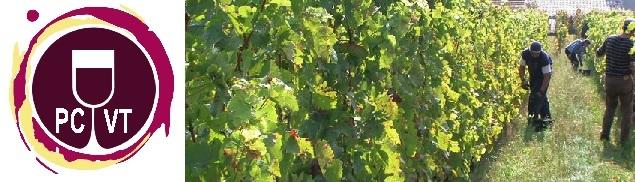 Partager ses Connaissances sur le Vin